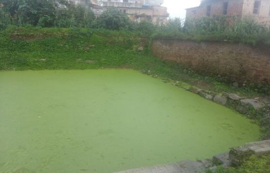 Bade tole pond conservation ward 4